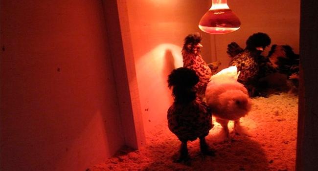 Инфракрасные лампы для обогрева и сушки